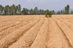 Rutted soil cultivation for cassava Stock Photos