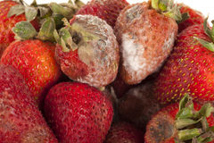rutten frukt royaltyfri bild