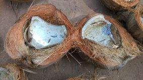 Rutten kokosnöt Arkivfoton