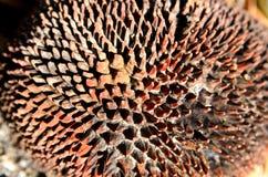 Rutten stålarfrukttextur Royaltyfria Foton