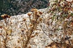 Rutten sten och torra blommor royaltyfri bild