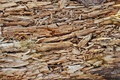 Rutten wood textur Arkivbild