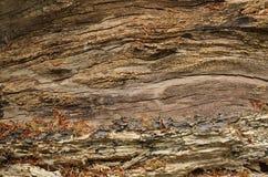 Rutten wood textur Arkivbilder
