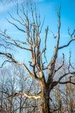 Ruttet gammalt träd royaltyfri fotografi
