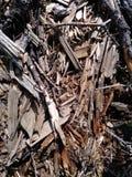 Ruttet trä 2 Arkivbilder