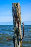Ruttet träd Fotografering för Bildbyråer