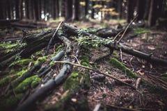 Ruttet träd i ett trä täckt av mossa Arkivbild