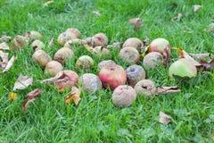 Ruttna äpplen Royaltyfria Foton