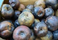 Ruttna äpplen - avfalls av mat Arkivfoton