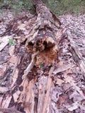 Ruttna inloggning skogen royaltyfri foto