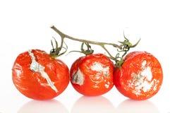 Ruttna tomater Arkivbilder