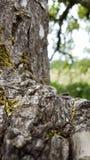 Ruw boomboomstam en lidmaat stock fotografie