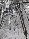 Ruw de winterpark royalty-vrije stock fotografie