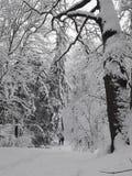 Ruw de winterpark stock foto