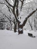 Ruw de winterpark royalty-vrije stock afbeeldingen