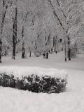 Ruw de winterpark stock afbeelding