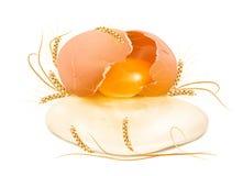 Ruw gebroken ei in shell met tarwe Stock Afbeeldingen