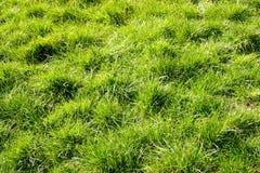 Ruw gras Stock Foto