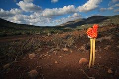 Ruw landschap met verloren oranje installatie Stock Fotografie