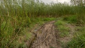 Ruw Muddy Path Surrounded met Lang Groen Bomen en Gras - Landelijke Weg na de Regen stock afbeelding