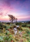 Ruw Platteland Van Cornwall royalty-vrije stock afbeeldingen