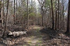 Ruw Ridge Trail in de Cohutta-Wildernis royalty-vrije stock foto