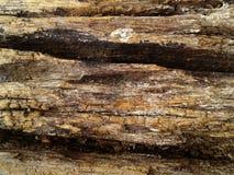 Ruw silicified houten oppervlaktetextuur De achtergrond van de foto royalty-vrije stock foto's