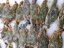 Ruw van krab op zee voedsel in supermarkt in Thailand Stock Foto's