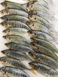 Ruw van vissen op zee voedsel in supermarkt in Thailand Stock Foto