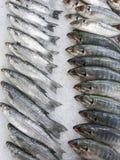 Ruw van vissen op zee voedsel in supermarkt in Thailand Royalty-vrije Stock Afbeeldingen