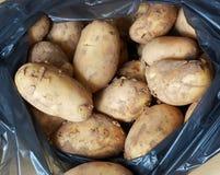 Ruwe aardappel Stock Afbeeldingen