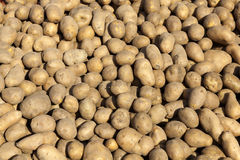 Ruwe aardappels als achtergrond Royalty-vrije Stock Foto's