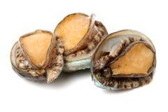 Ruwe abalone stock foto