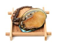 Ruwe abalone royalty-vrije stock afbeeldingen