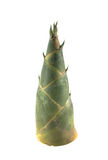 Ruwe bamboespruit royalty-vrije stock foto