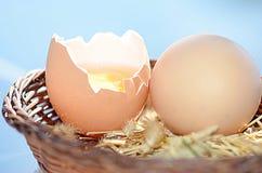 Ruwe bruine eieren Royalty-vrije Stock Afbeelding