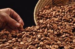 Ruwe cacaobonen Royalty-vrije Stock Afbeeldingen