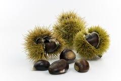 Ruwe chestnuts.a sluiten omhoog ontsproten Stock Afbeelding