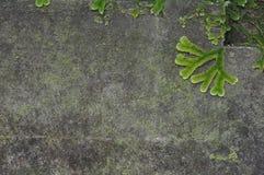 Ruwe concrete achtergrond Royalty-vrije Stock Foto's
