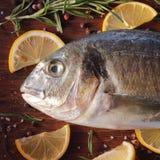 Ruwe doradovissen met rozemarijn en overzees zout Royalty-vrije Stock Foto's