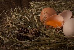 Ruwe eieren Royalty-vrije Stock Fotografie