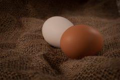 Ruwe eieren Royalty-vrije Stock Foto's