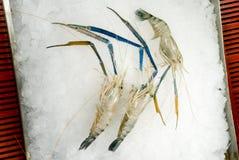 Ruwe garnalen op ijs Royalty-vrije Stock Afbeeldingen