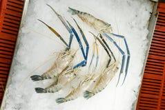 Ruwe garnalen op ijs Stock Foto