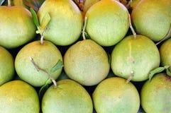 Ruwe grote groene grapefruit Royalty-vrije Stock Foto