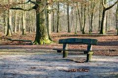 Ruwe houten bank in een bos Stock Foto's