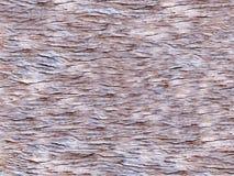 Ruwe houten textuur Stock Afbeelding