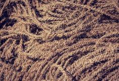 Ruwe kokosnotenkabel als achtergrond Stock Foto