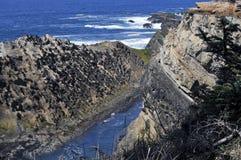 Ruwe Kust bij Coo Baai, Oregon Royalty-vrije Stock Fotografie