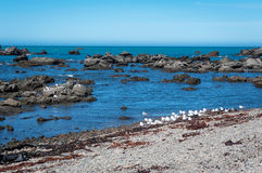 Ruwe kustlijn van Kaikoura, Nieuw Zeeland Royalty-vrije Stock Fotografie